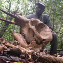 Estudio asegura que la caza está amenazando la vida silvestre de las regiones tropicales