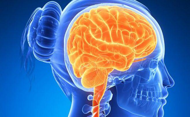 Evidencia científica demuestra que cerebro de la mujer cambia de tamaño durante ciclo menstrual