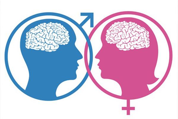 Cerebro Femenino Vs Masculino Tienen Capacidades Diferentes El