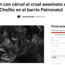 Change.org: en Chile más 400 mil personas han firmado una petición animalista posicionándola como la causa n°1 de participación ciudadana