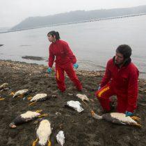 Greenpeace indignado ante declaración de Súnico por vertimiento de salmones en Chiloé: