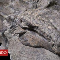 [VIDEO] Cómo este dinosaurio de 110 millones de años logró conservarse casi intacto