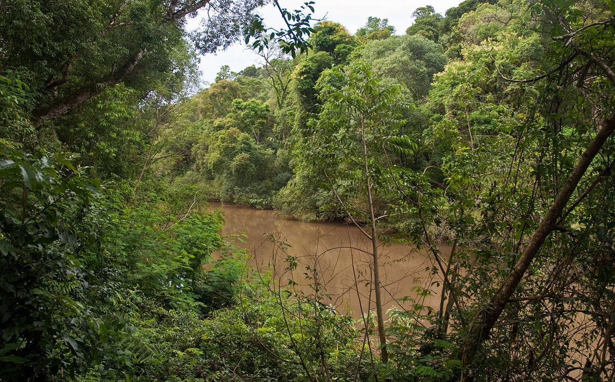 La deforestación del Bosque Atlántico brasileño aumentó un 57 % en último año