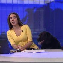 [VIDEO] La curiosa interrupción de un perro a una periodista en pleno noticiero
