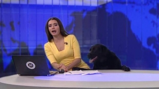 [VIDEO] La curiosa interrupción de un perro a una periodista en pleno noticiero