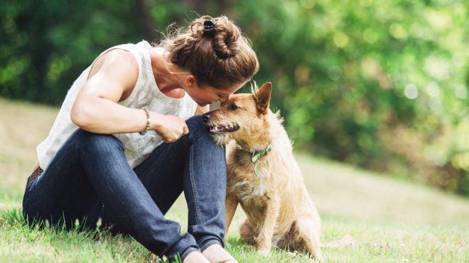 Perros al parque: cómo tener una sana convivencia entre mascotas y personas