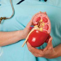 Semana del riñón: La incidencia del sobrepeso en las enfermedades renales