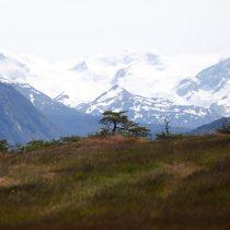 Operadores turísticos y periodistas de nueve países explorarán Tierra del Fuego