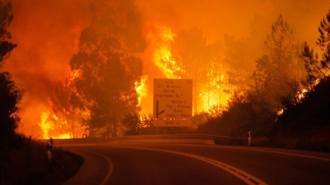 Al menos 62 personas muertas deja incendio forestal en Portugal