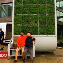 [VIDEO] Cómo es el árbol de musgo alemán diseñado para absorber la polución del aire en las ciudades