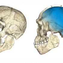 El fascinante hallazgo del primer 'Homo sapiens' que reescribe lo que se sabe del origen humano