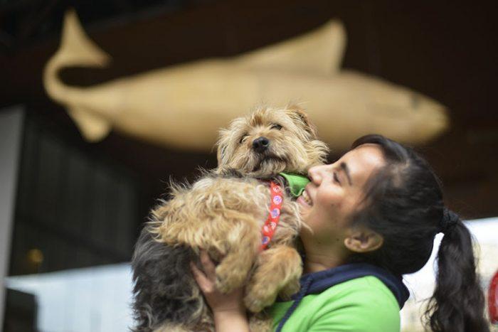 Salud para mascotas: ¿altos costos médicos ponen en riesgo el cumplimento de Ley de Tenencia Responsable?