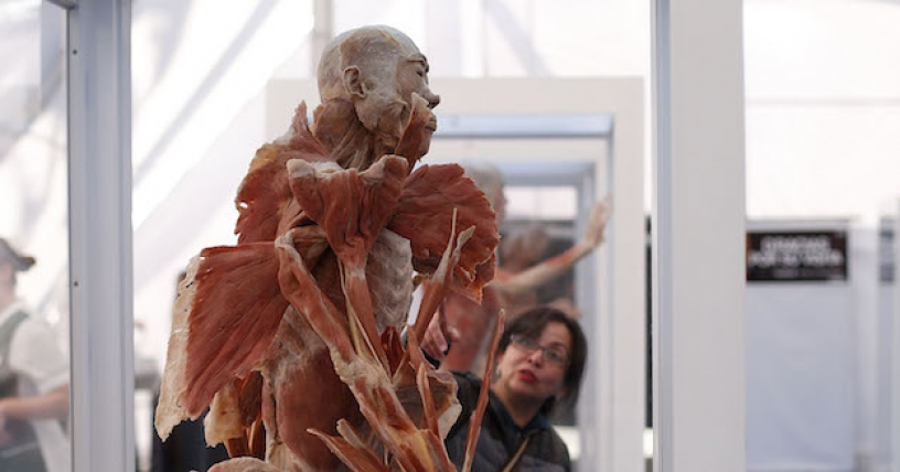 "Exhibición ""Bodies: Cuerpos humanos reales"" en Mall Florida Center"