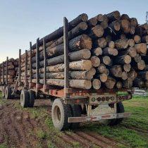 Otro fraude aterriza en Sanhattan: banca y factoring sufren millonario golpe por empresa forestal controlada por fondo de capital privado Equitas Chile