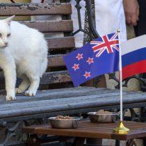 Un gato sordo, una osa polar y un robot, los oráculos de la Copa Confederaciones