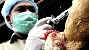 Chile utilizará moderno sistema de detección del virus de la gripe aviar