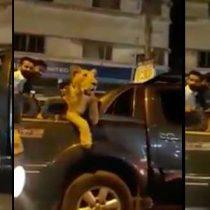 [VIDEO] Hombre es arrestado por llevar un león en la parte trasera de su camioneta en Pakistán