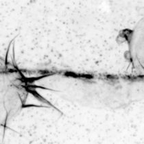 Científicos avanzan en la comprensión del movimiento celular