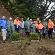 En Chile se está desarrollando el primer proyecto de plantación a gran escala e investigación científica