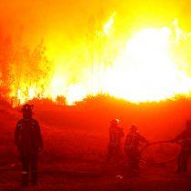 Fiscalía indaga relación entre incendios forestales y cuarentena del SAG a bosques afectados por grave plaga de avispas