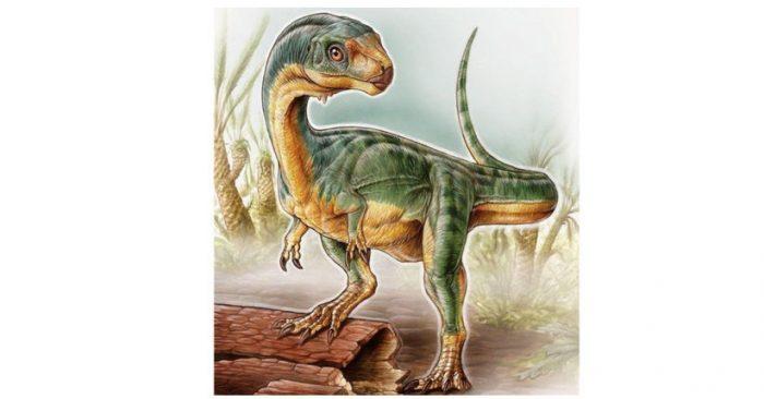 """Resuelven el misterio del Chilesaurus, el """"Frankenstein"""" de los dinosaurios que no coincidía con ninguna especie conocida"""