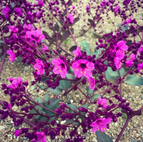 Las maravillas del desierto florido