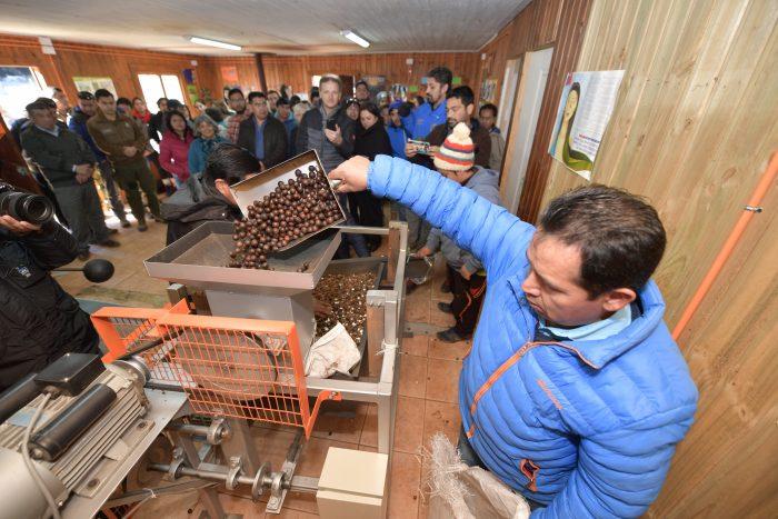 La reinvención de la comunidad pehuenche El Avellano en el Alto Biobío