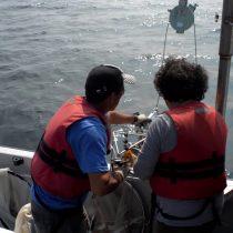 Científicos chilenos descubren que bacterias de zonas marinas anóxicas poseen la capacidad de producir oxígeno