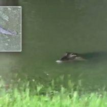 [VIDEO] Huracán Harvey lleva a dos cocodrilos a nadar dentro del patio de una casa