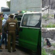 Primer caso donde se aplica la Ley Cholito: formalizan a dueña de perros Rottweiler que atacaron a anciana