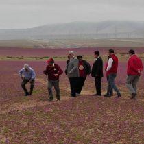 Piñera se gana troleo en Twitter por foto que lo muestra pisando el desierto florido
