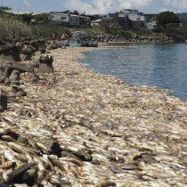 [VIDEO] Miles de peces aparecen muertos en ríos de Taiwán tras fuerte ola de calor