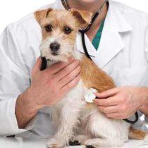 Resistencia Antimicrobiana: Los peligros de enfermedades sin cura para nuestros animales y el riesgo para los humanos