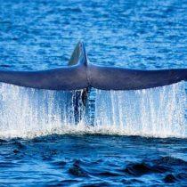 Chile crea el área marina protegida más austral del mundo