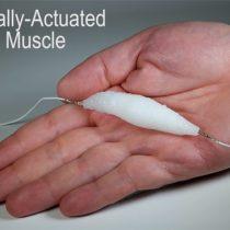 [VIDEO] Desarrollan un material equivalente al músculo humano para robots
