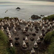 Chile anuncia la protección de más de un millón de kilómetros cuadrados con parques marinos