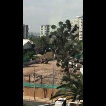 [VIDEO] Polémica tala de araucaria en Ñuñoa obliga a municipalidad a dar explicaciones