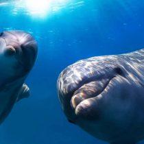 Ballenas y delfines tienen comportamientos similares a las sociedades humanas