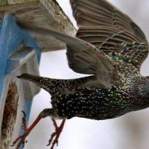 Cae drásticamente en Alemania la población de insectos y pájaros