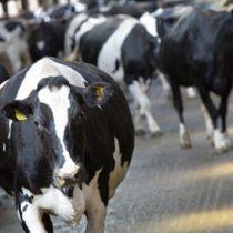 Cómo cambiaría la economía si todos nos volviéramos vegetarianos