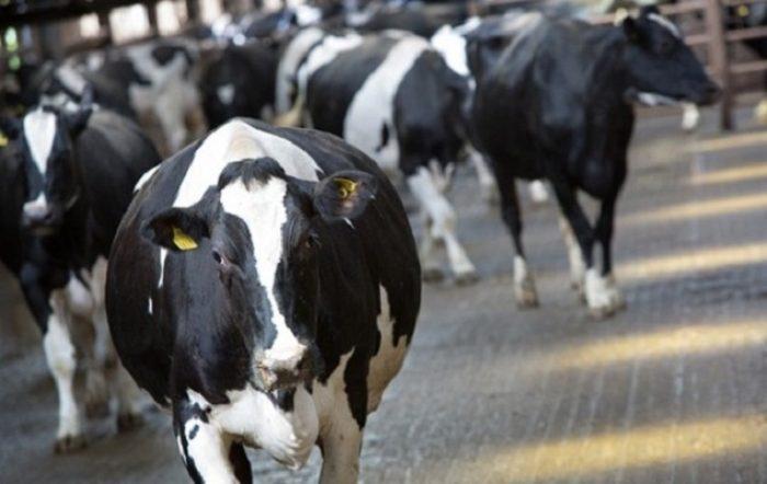 Carnívoros de Brasil, los nuevos vegetarianos orgánicos y el jaque a la industria
