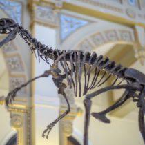 Dinosaurios sudamericanos se dan cita en histórica exposición en Santiago