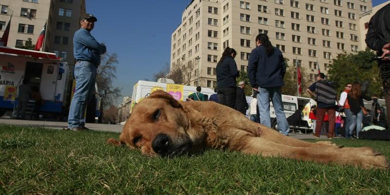 Ola de calor: Cómo afectan las altas temperaturas a nuestras mascotas y los síntomas a los que hay que estar atentos