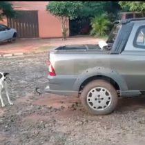 [VIDEO] Registro de perro amarrado a una camioneta es clave en primera imputación por maltrato animal en Paraguay