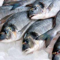 Nutricionistas en alerta por reportaje de pescado en mal estado: exigen mayor fiscalización dado el impacto en la salud de la población