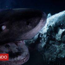 [VIDEO] El tenso momento en que dos grandes tiburones atacan al submarino de un equipo de Blue Planet II de la BBC