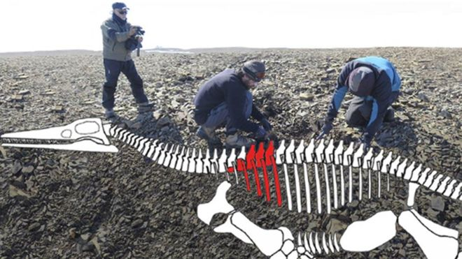 Descubren en la Antártica los restos de un lagarto gigante de hace 150 millones de años