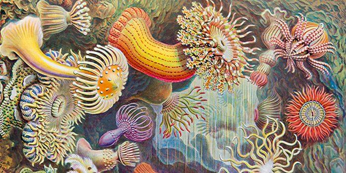 Ernst Haeckel, el arte al servicio de la ciencia