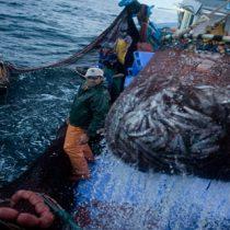 Pescadores artesanales emplazan a Piñera a actuar como