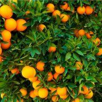 Cobre y jugo de naranja, dos historias opuestas para cerrar 2017
